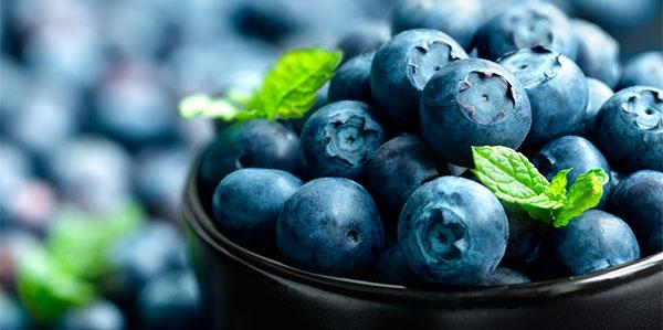 Mirtilos e seus benefícios para a saúde.